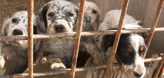 Hundemarkt Belgien – ist das noch legal?